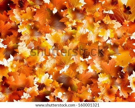 Colorful autumn leaves. And also includes EPS 10 vector - stock vector