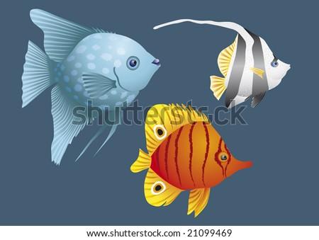 Colorful fish of coral reefs, John Dory, water, aquarium, swim, sea, fingerlings, animal, marine life, ocean, fishbowl, endangered species, animals, nature, wildlife, underwater, diving, blue, beach - stock vector