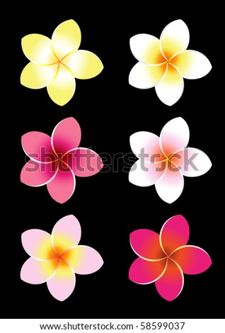 Colorful Frangiapani flowers. Set no. 2. - stock vector
