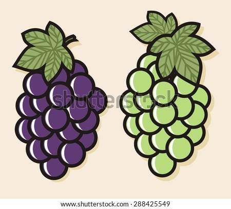 Colorful fruit illustrations - Wine Grapes (2 of 4) - stock vector