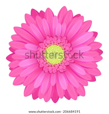 Colorful gerbera flower head - pink and green colors. - stock vector