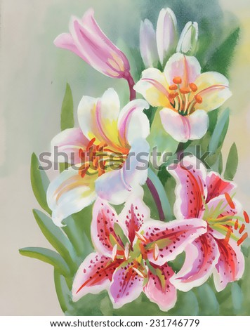 Colorful Lily flowers, vector illustration - stock vector