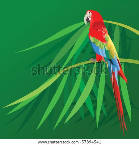 colorful parrot isolated in green background - stock vector