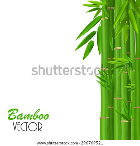 Colorful Stems and Bamboo Leaves. Vector Illustration. EPS10 - stock vector