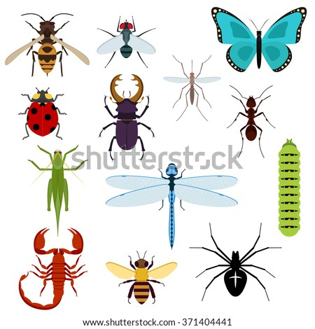 Colorful top view insects icons with bee, grasshopper, ant, fly, dragonfly and ladybird, spider and mosquito, caterpillar, stag beetle and scorpion. Isolated on white - stock vector