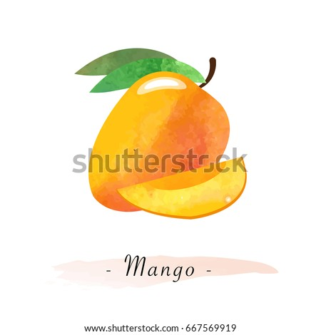 Colorful watercolor texture vector healthy fruit mango