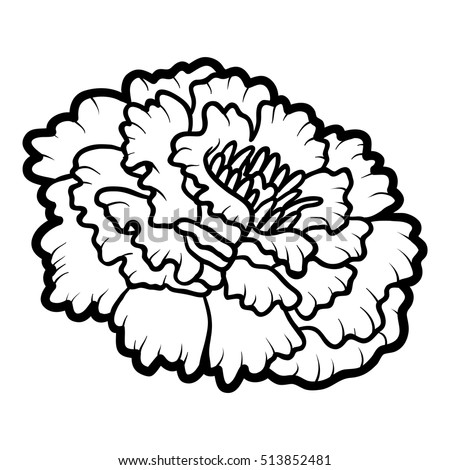 Marigold Flower Stock Images, Royalty-Free Images ...