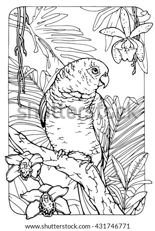 coloring page for adults; antistress drawing; parrot in jungle