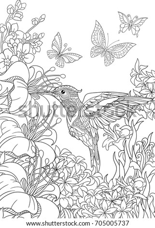 Coloring Page Hummingbird Butterflies Hibiscus Flowers Stock Vector HD  (Royalty Free) 705005737   Shutterstock
