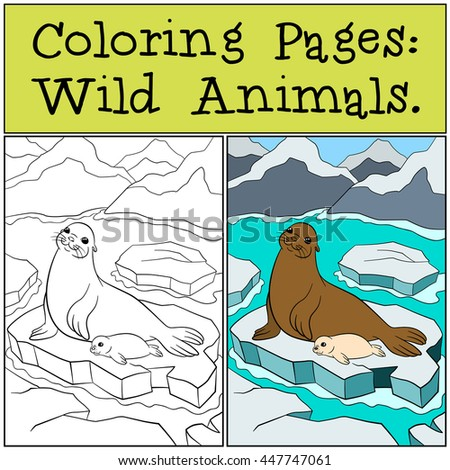 Coloring Page With Example Mother Seal Her Little Cute Baby Lay On The Ice
