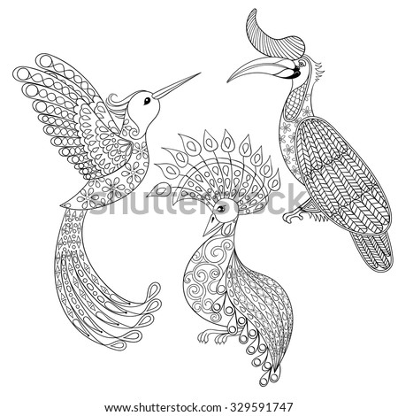 Coloring Page With Hornbill Hummingbird And Exotic Bird Zentangle Illustartion For Adult Books