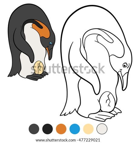 Coloring pages. Father penguin looks at the egg.