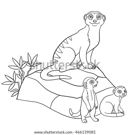 coloring pages mother meerkat with her little cute babies on the stones