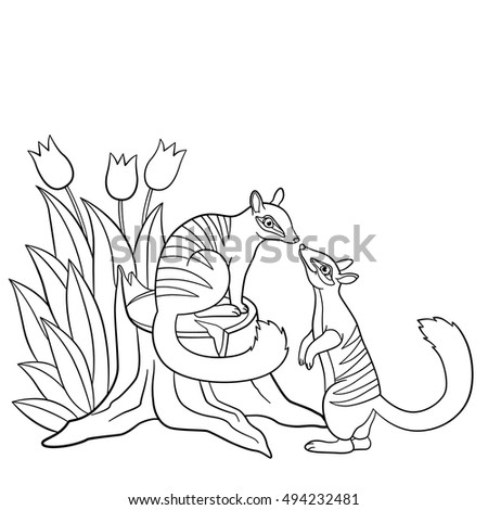 Numbat coloring pages coloring pages