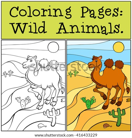 coloring pages wild animals cute camel stands on the sand in the desert and