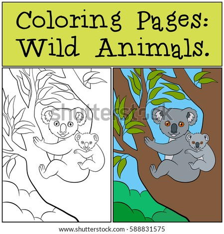 coloring pages wild animals mother koala sits on the tree branch with her little