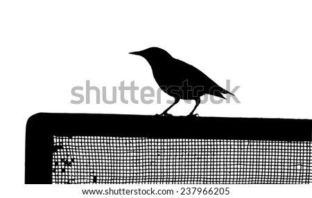 Common Starling on the fence silhouette - stock vector