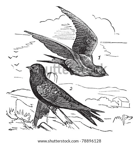 Flying bird illustration vintage - photo#23
