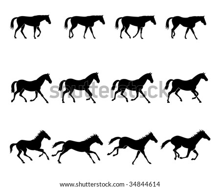 Computer generated illustration: the three natural gaits of the horses. First row: WALK  Second row: TROT  Third row: GALLOP Black silhouettes on white background - stock vector