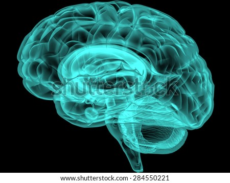 Concept of an Active Human Brain Vector - stock vector