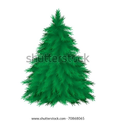 Coniferous tree isolated. Vector illustration on white background - stock vector