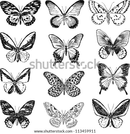 Butterfly Images For Drawing contour butterflies