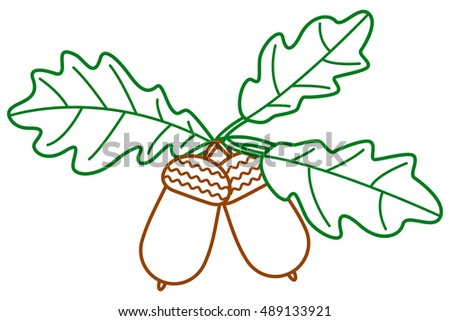 Contour illustration of the oak branch with acorn fruits