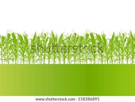 Corn field detailed countryside landscape ecology illustration background vector - stock vector