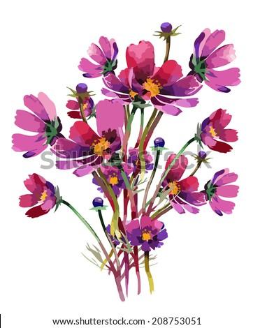 Cosmos flowers - stock vector