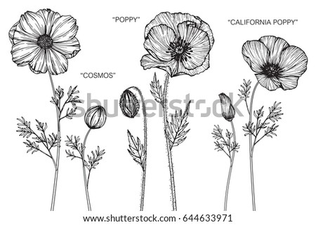 Cosmos poppy california poppy flowers drawing stock vector 644633971 cosmos poppy california poppy flowers drawing and sketch with line art on white mightylinksfo