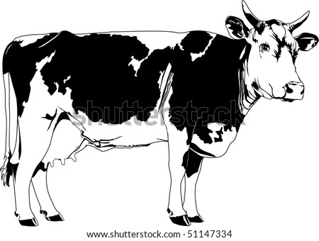cow - stock vector