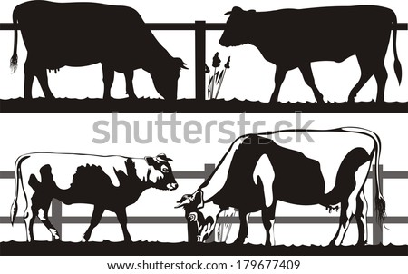 cow and bull on the pasture - stock vector