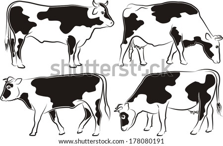 cow and bull - outlines and silhouettes - stock vector