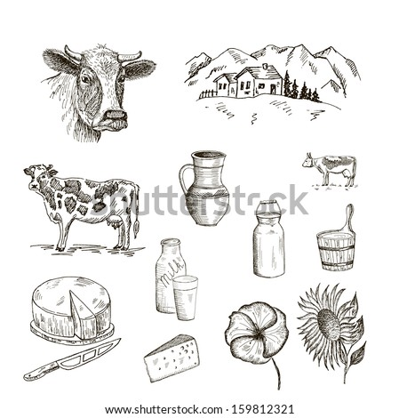 cow and milk. set of vector sketches - stock vector