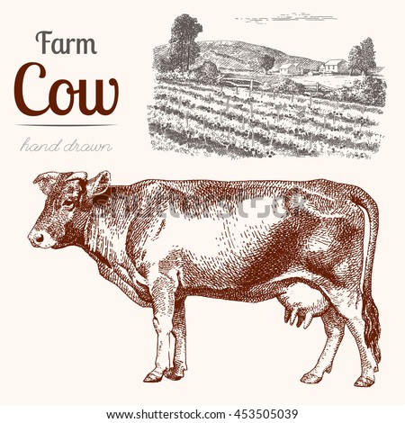 Cow-2. Animal husbandry. Cow and farm in graphic style from hand drawing image. Set of vector scetches. - stock vector