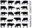Cow collection - vector silhouette - stock photo