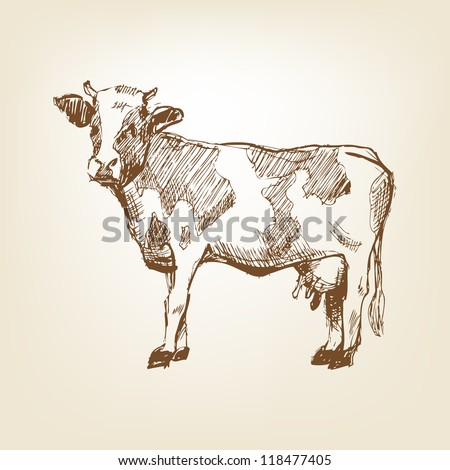 Cow hand drawn - stock vector