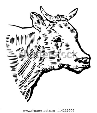 COW head, drawing - stock vector