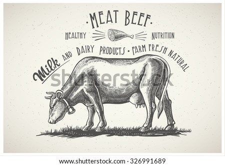 Cow in graphic style, and inscriptions, drawing illustration by hand.