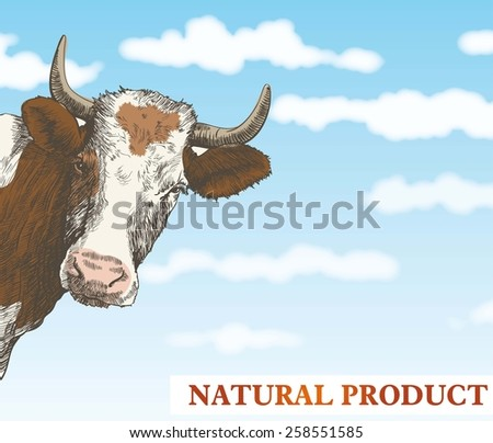 cow looks out from behind a corner against a beautiful blue sky with white clouds - stock vector