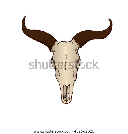Cow or bull skull isolated