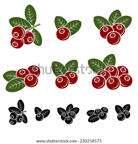 Cranberry set. Vector  - stock vector