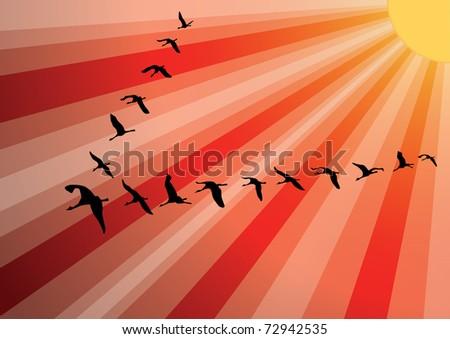 Crane birds flock against sunset. Vector Background. - stock vector