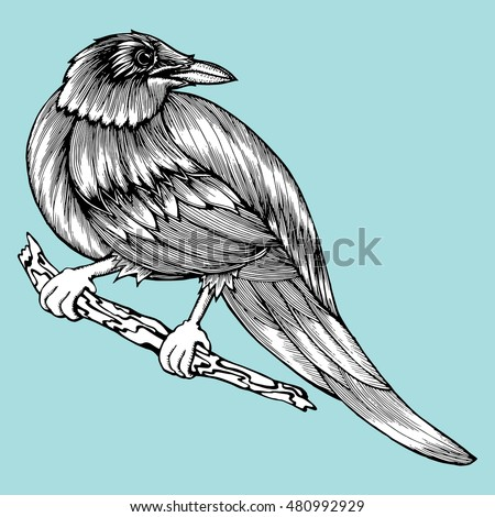 Crow sitting on a branch. Stylized crow. Raven. Bird. Rook. Line art. Drawing by hand. Doodle. Tattoo.