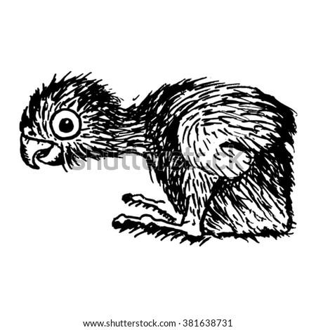 cub parrot vector sketch - stock vector