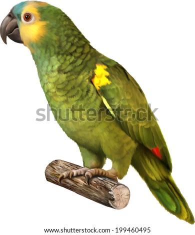 Cute Beautiful green Parrot isolated on white - stock vector