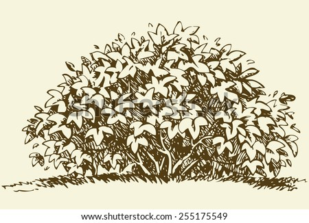 Cute big green deciduous bush with lush foliage. Vector monochrome freehand sketchy linear ink drawn backdrop in style pen on paper with space for text on sky - stock vector