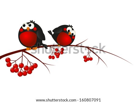 Cute bullfinches on a rowan branch