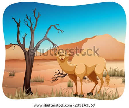 Cute camel standing in the middle of the desert