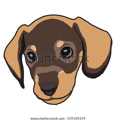 Cute Dachshund Puppy - stock vector